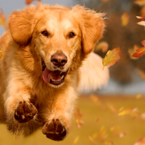 dog running through leaves